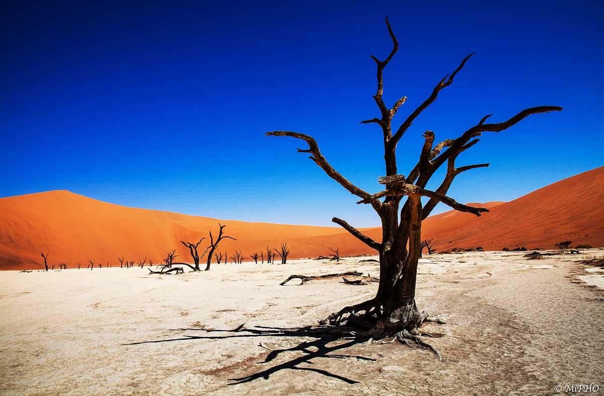 Skeleton trees in Deadvlei, Namibia.