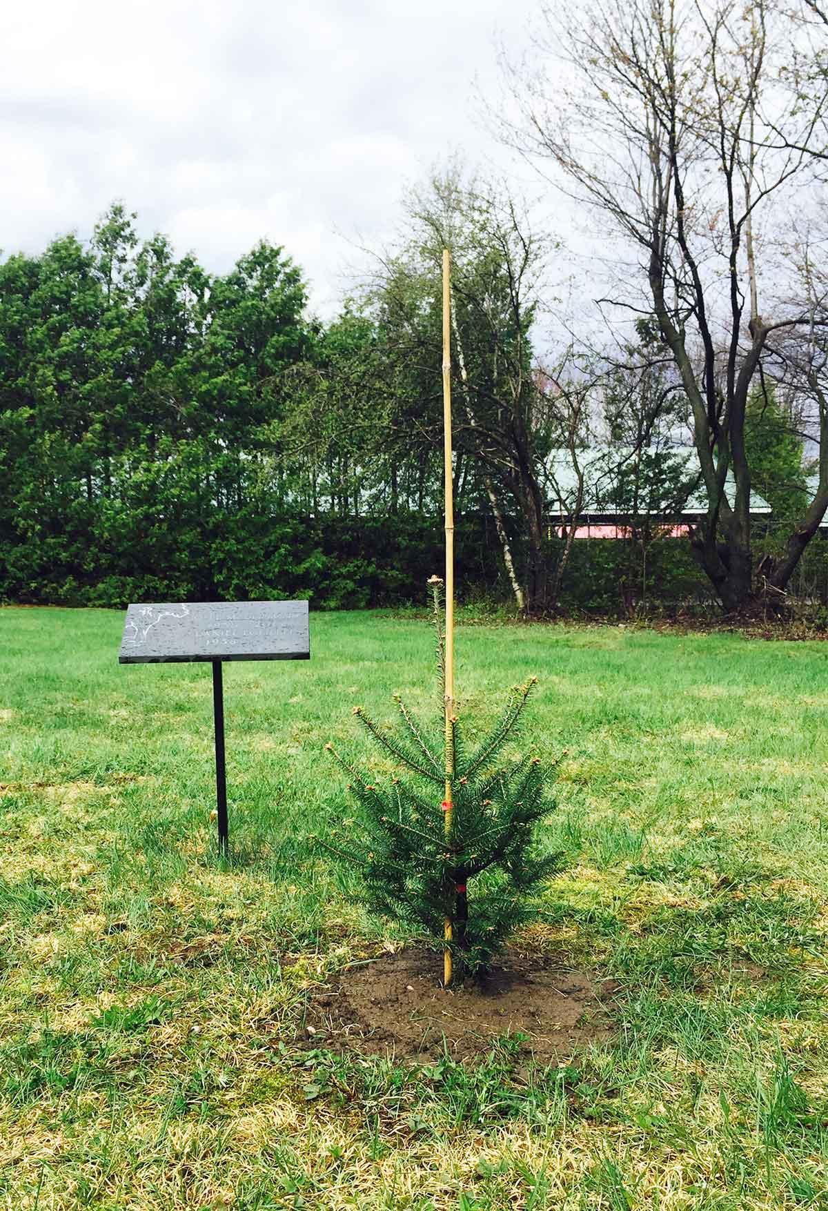 Bios Urn Biodegradable Urn planted in Garden