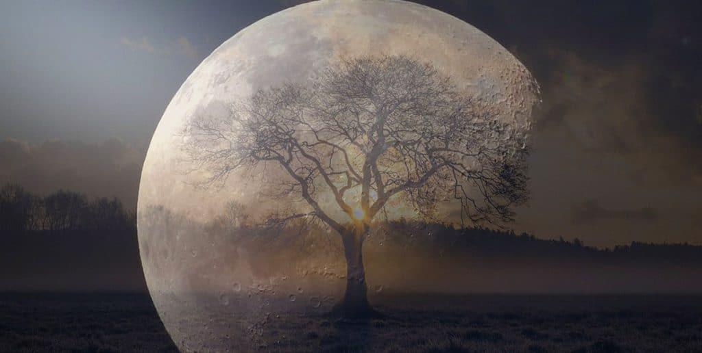 NASA Moon Trees
