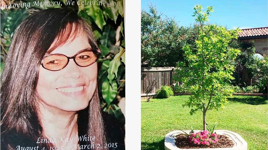 Rhonda Planted Her Mom's Bios Urn With An Oak Tree In A Backyard