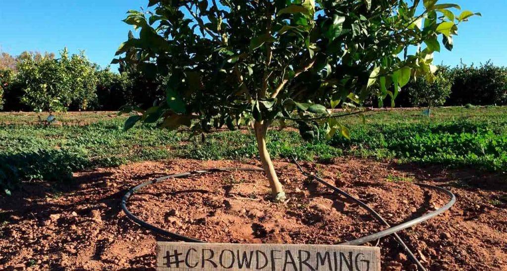 Bienvenido al fascinante mundo del CrowdFarming