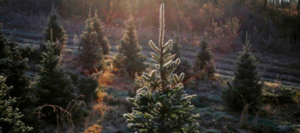 La Historia del Árbol de Navidad
