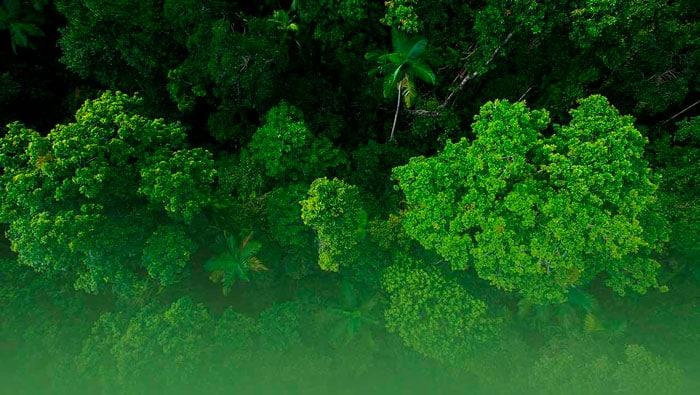 Bios Urn Blog: TreeSisters