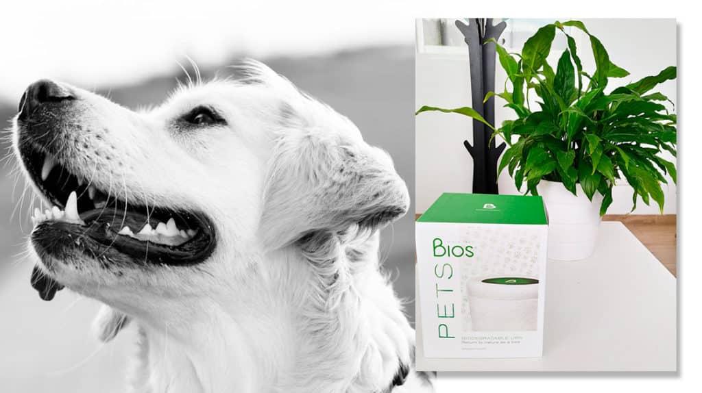 Everpet: Uno de Los Primeros Crematorios De Mascotas En El Mundo En Ofrecer La Urna Bios Pets, la urna para mascotas de Bios Urn