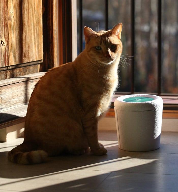 L´Urne Bios Pets ® est une urne pour animaux biodégradable qui contient les cendres de votre fidèle compagnon et les transforme en arbre. By Bios Urn®
