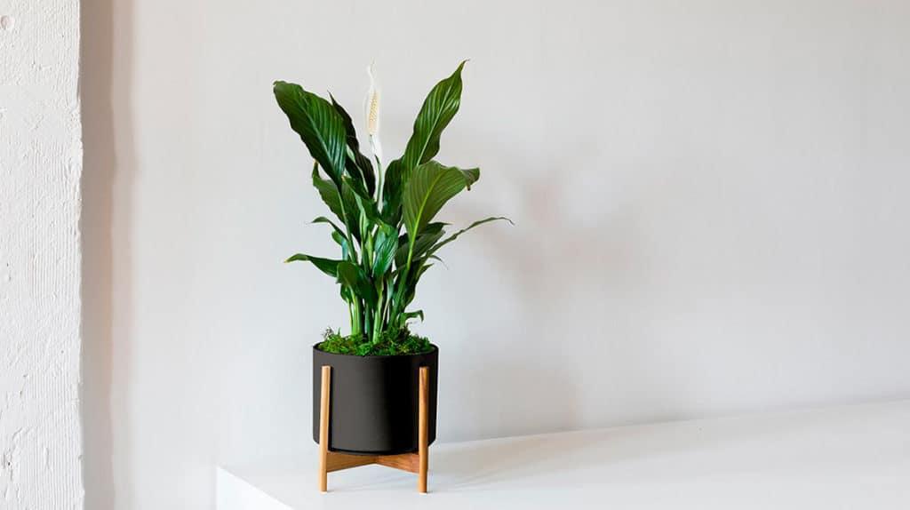 Bios Urn Blog: Easy houseplants that clean the air