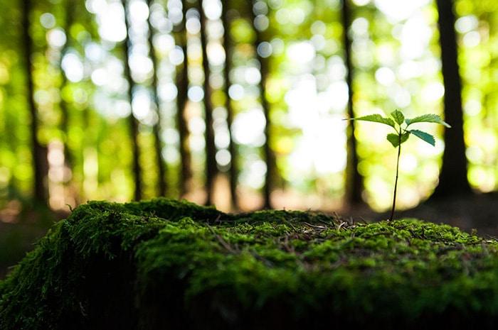 Bios Urn Blog - Seeds vs. seedlings
