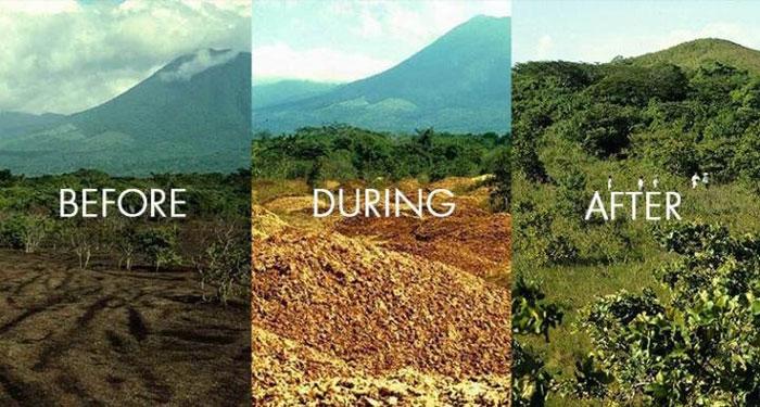 Blog Bios Urn: Les humains peuvent-ils redonner vie à une forêt?