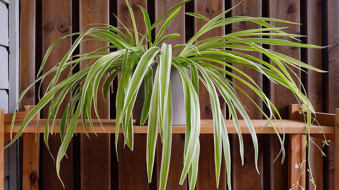20 Plantas De Interior No Tóxicas Para Mascotas