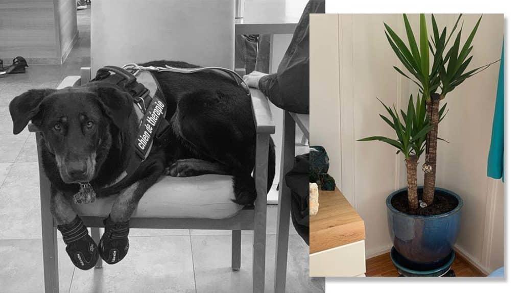 """Bios Urn Blog: """"I Am Dog Trainer and Zootherapist"""" - Marion's Bios Story / Blog Urne Bios : Le témoignage de Marion, coach canin, et son chien Kumal qui est devenu un arbre"""