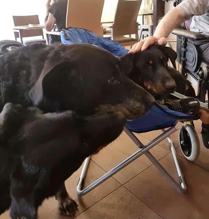 """Blog Urne Bios: """"Soy Entrenadora de Perros y Zooterapeuta"""" - Testimonio Bios de Marion"""